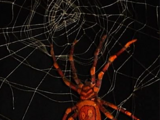 Man-Eating Spiders