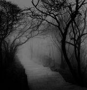 Creepy walk way in forest