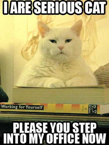 File:Pandora Are Serious Cat.jpg