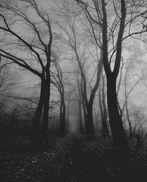 Creepy lost woods