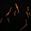 Icons patterns worm-orange