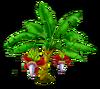 Banana Tree Stage 2
