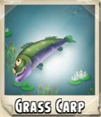 Grass Carp Photo