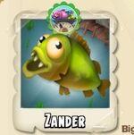 Zander Photo