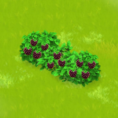 File:Blackberry Bush Harvest 3.png