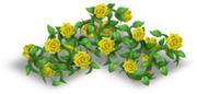 Recinto di rose giallo