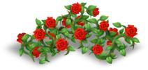 Recinto di rose rosso