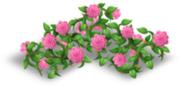 Recinto di rose rosa