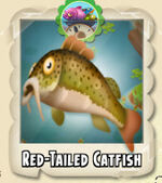 Red-Tailed Catfish Photo