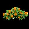 Rose Fence Orange