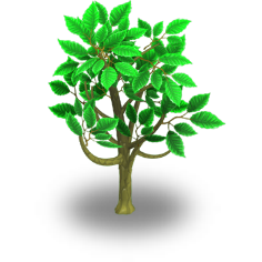 File:Cacao Tree Stage 1.png
