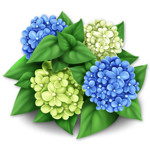 File:Blue Hydrangeas.png