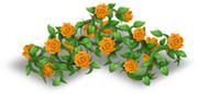 Recinto di rose arancione