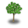 Lemon Tree Stage 2