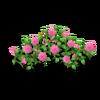 Rose Fence Pink