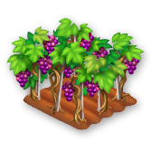 File:Grapes Stage 4.png