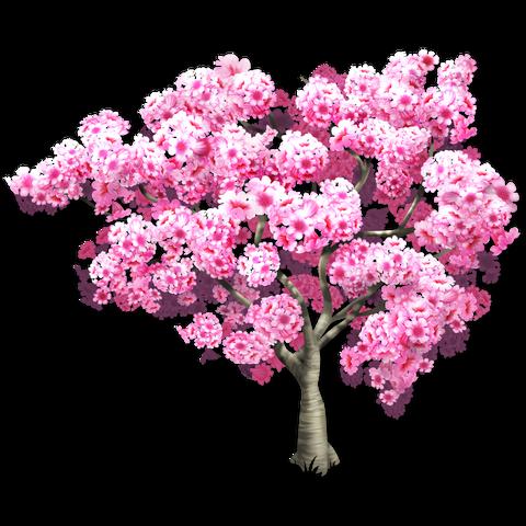 File:Pink Trumpet Tree.png