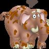 Elefante Marrone