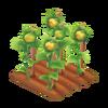 Sunflower Stage 3
