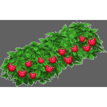File:Raspberry Bush.png