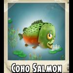 Coho Salmon Photo