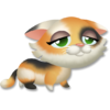 Calico Kitten Tired