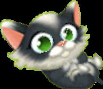 Gattino Bianco e Nero 2