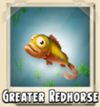 Greater Redhorse