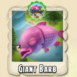 Giant Barb Photo