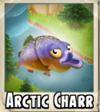 Arctic Charr