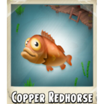 Copper Redhorse Photo