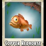 Copper Redhorse Photo