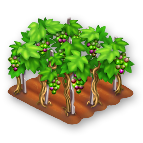 File:Grapes Stage 3.png