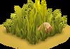 Savannah Grass