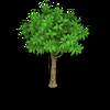 Lemon Tree Stage 1