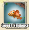 Copper Redhorse
