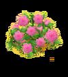 Rosenzaun Rosa