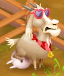 Latte di capra pronto estate