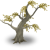 Cherry Tree Dead