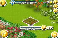 Feld-Wachstum