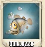 Quillback Photo