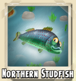 Northern Studfish Photo
