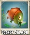 Sockey Salmon