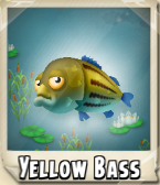 Yellow Bass Photo