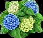 Hortensie weiß-blau