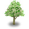 Apple Tree Stage 2