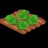 Lettuce Stage 4