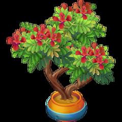 Red Acacia (Mohawk)