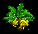 Banano 3
