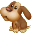 Cucciolo Di Bracco 2